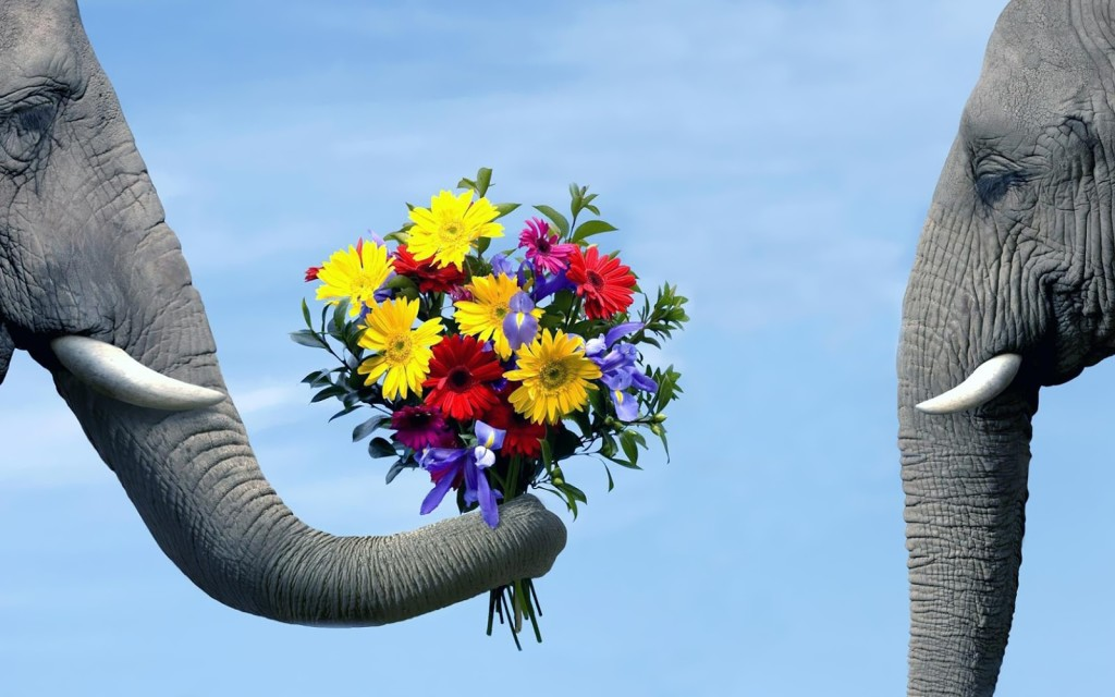 Animal-Picture-Elephant-Giving-Flowers-To-Another-Elephant-HD-Wallpaper-1024x640