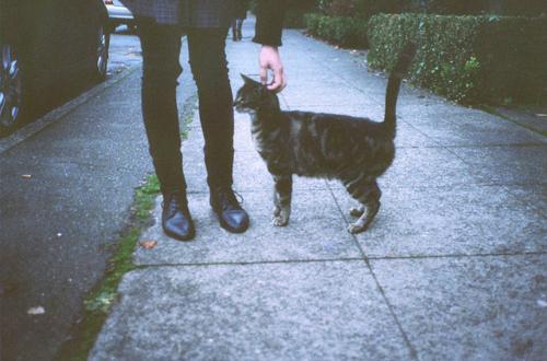 black-boots-cat-cute-Favim.com-2114678